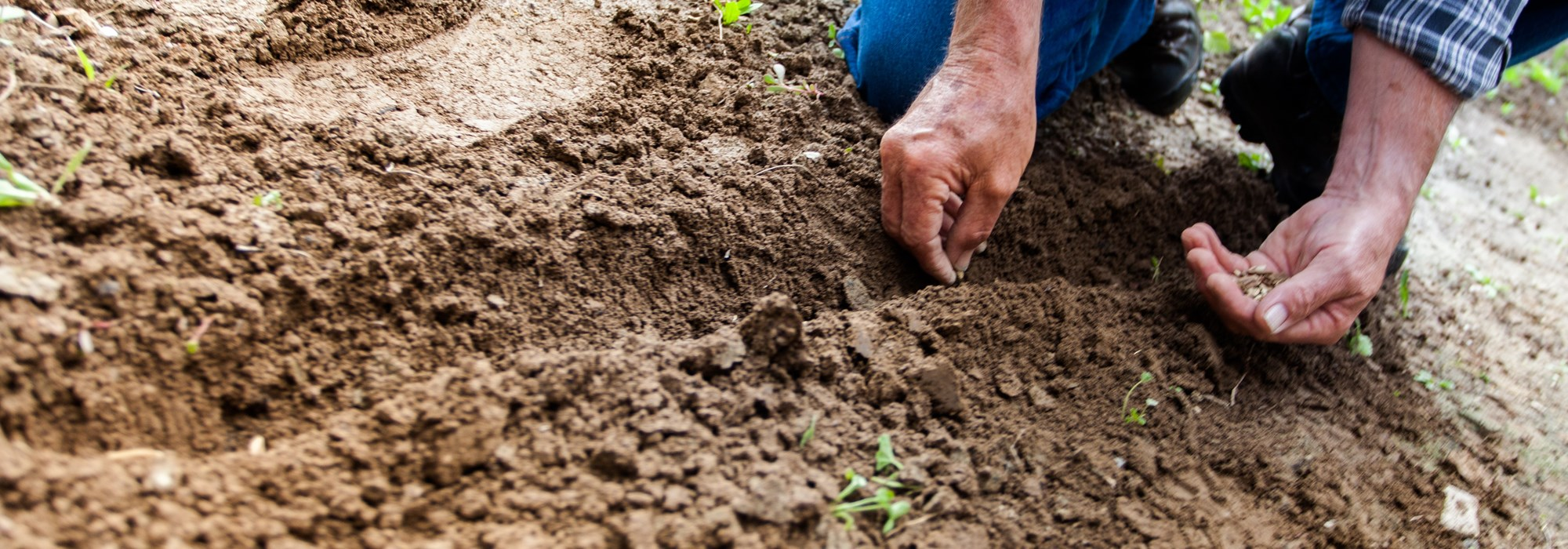 Man planting in soil