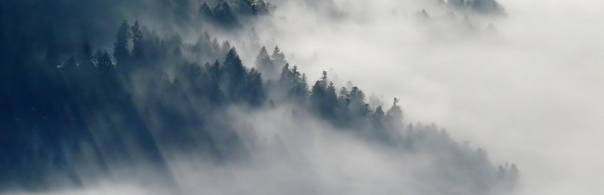 Fog covering trees
