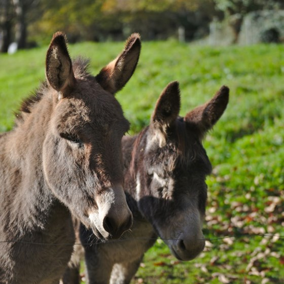 Donkeys by some grass